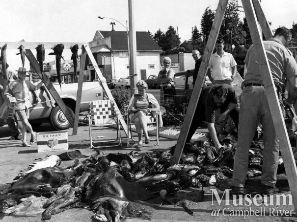 Spearfishing meet held June 30, 1968, Tideripper's club.